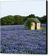 Stone Shed In Field Of Bluebonnets Canvas Print by Jeremy Woodhouse