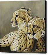 Stranger In The Midst. Canvas Print by Lucinda Coldrey