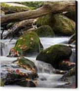 Stream Of Thought Canvas Print by Charles Warren