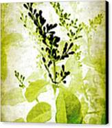 Study In Green Canvas Print by Judi Bagwell