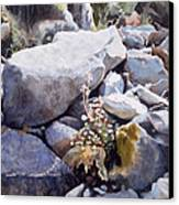 Summer Streambed Canvas Print by Sharon Freeman