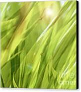 Summertime Green Canvas Print by Ann Powell