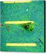 Sun Spots Canvas Print by Art Dingo