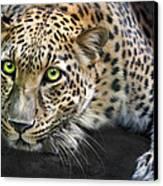 Sundari Canvas Print by Big Cat Rescue