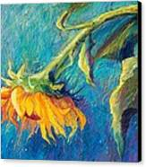 Sunflower Canvas Print by Candy Mayer