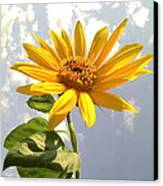 Sunflower Canvas Print by Marilyn Sargent