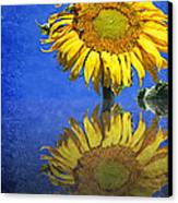 Sunflower Reflection Canvas Print by Andee Design