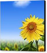 Sunflowers, Artwork Canvas Print by Victor Habbick Visions