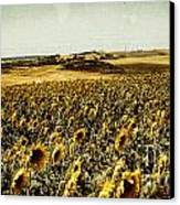 Sunflowers Field  Canvas Print by Anja Freak