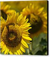 Sunflowers Canvas Print by Lisa Moore