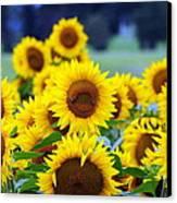 Sunflowers Canvas Print by Paul Ward