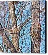 Sunning In The Tree Canvas Print by Aimee L Maher Photography and Art Visit ALMGallerydotcom