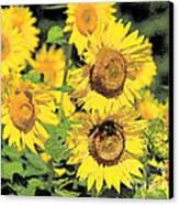 Sunny Sunflowers Canvas Print by Diana  Tyson