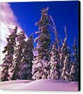 Sunrise Over Snow-covered Pine Trees Canvas Print by Natural Selection Craig Tuttle