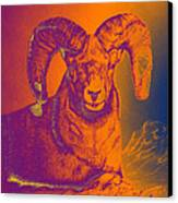 Sunrise Ram Canvas Print by Mayhem Mediums