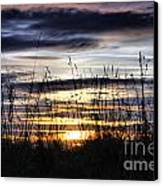 Sunset Grasses Canvas Print by Sandra Cockayne