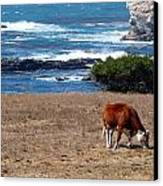 Surf And Turf  Canvas Print by Jeff Lowe
