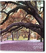 Surreal Old Oak Tree South Carolina Fall Colors Canvas Print by Kathy Fornal