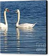 Swan Mates Canvas Print by Sabrina L Ryan