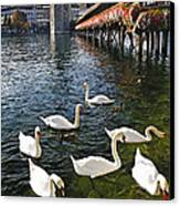 Swans Of The Chapel Bridge Canvas Print by George Oze