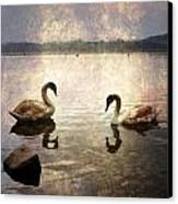 swans on Lake Varese in Italy Canvas Print by Joana Kruse