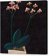 Table Orchid Canvas Print by M Valeriano