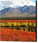 Talkeetna Mountains Moment Canvas Print by Alan Lenk