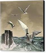 Terns In The Wind Canvas Print by IM Spadecaller