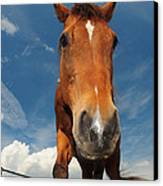 The Curious Horse Canvas Print by Paul Ward