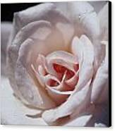 The Delicate Pale Pink Petals Canvas Print by Jason Edwards
