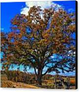The Devils Den Witness Tree. Canvas Print by Dave Sandt
