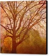 The Fairy Tree Canvas Print by Brett Pfister