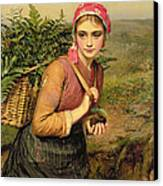 The Fern Gatherer Canvas Print by Charles Sillem Lidderdale