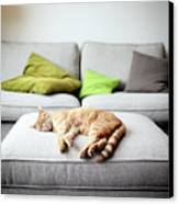 The Good Life Canvas Print by Marcel ter Bekke