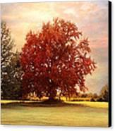The Healing Tree  Canvas Print by Jai Johnson