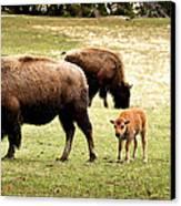 The Mighty Bison Canvas Print by Ellen Heaverlo