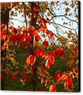 The Reds Of Autumn Canvas Print by Julie Dant
