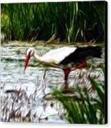 The Stork Canvas Print by Stefan Kuhn