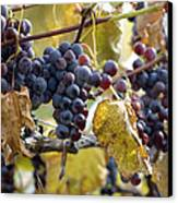 The Vineyard Canvas Print by Linda Mishler