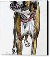 This Boxer Can Sing Canvas Print by Deborah Willard