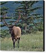 This Is Alberta No.19 - Taking A Stroll Canvas Print by Paul W Sharpe Aka Wizard of Wonders