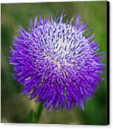 Thistle I Canvas Print by Tamyra Ayles