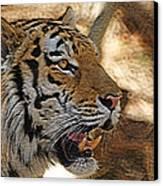 Tiger De Canvas Print by Ernie Echols