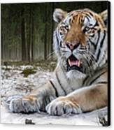 TJ  Canvas Print by Big Cat Rescue