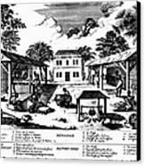Tobacco Plantation, C1670 Canvas Print by Granger