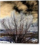Touch Of Frost Canvas Print by Will Borden