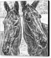 Trail Mates - Mule Portrait Art Print Canvas Print by Kelli Swan