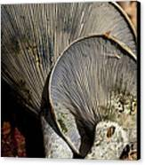 Treasures In The Woods Canvas Print by Wilma  Birdwell