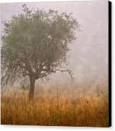 Tree In Fog Canvas Print by Debra and Dave Vanderlaan