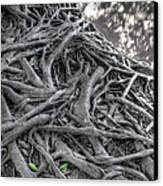 Tree Roots Canvas Print by Natthawut Punyosaeng